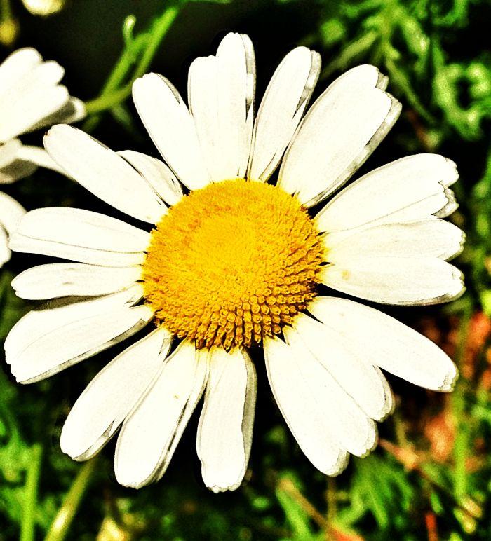 daisy-june 14 2012