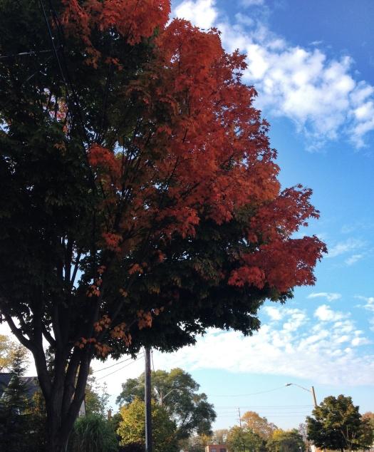 Tree_Snapseed